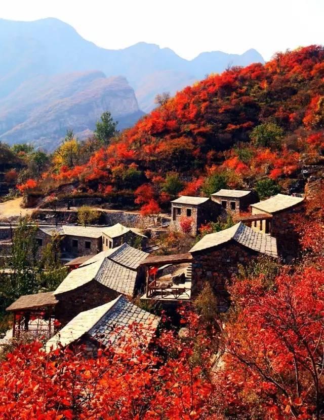 看,这里有京郊最美的一片红色!