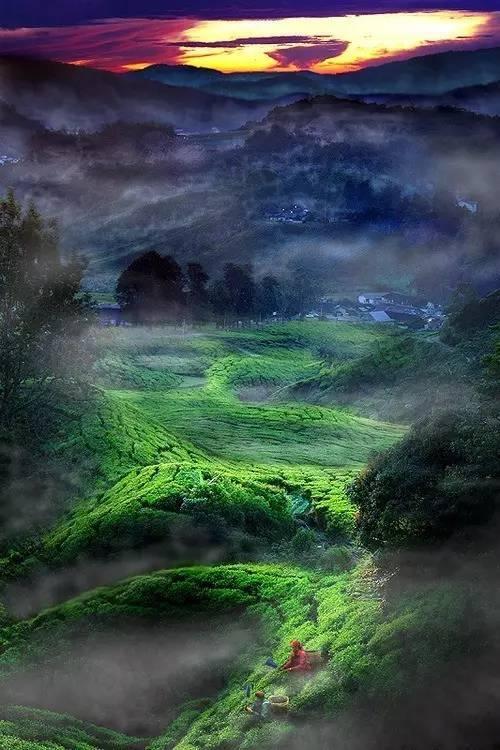 Rose【上帝的视角看世界——美得如此震撼】 - roseyang888 - roseyang888的博客