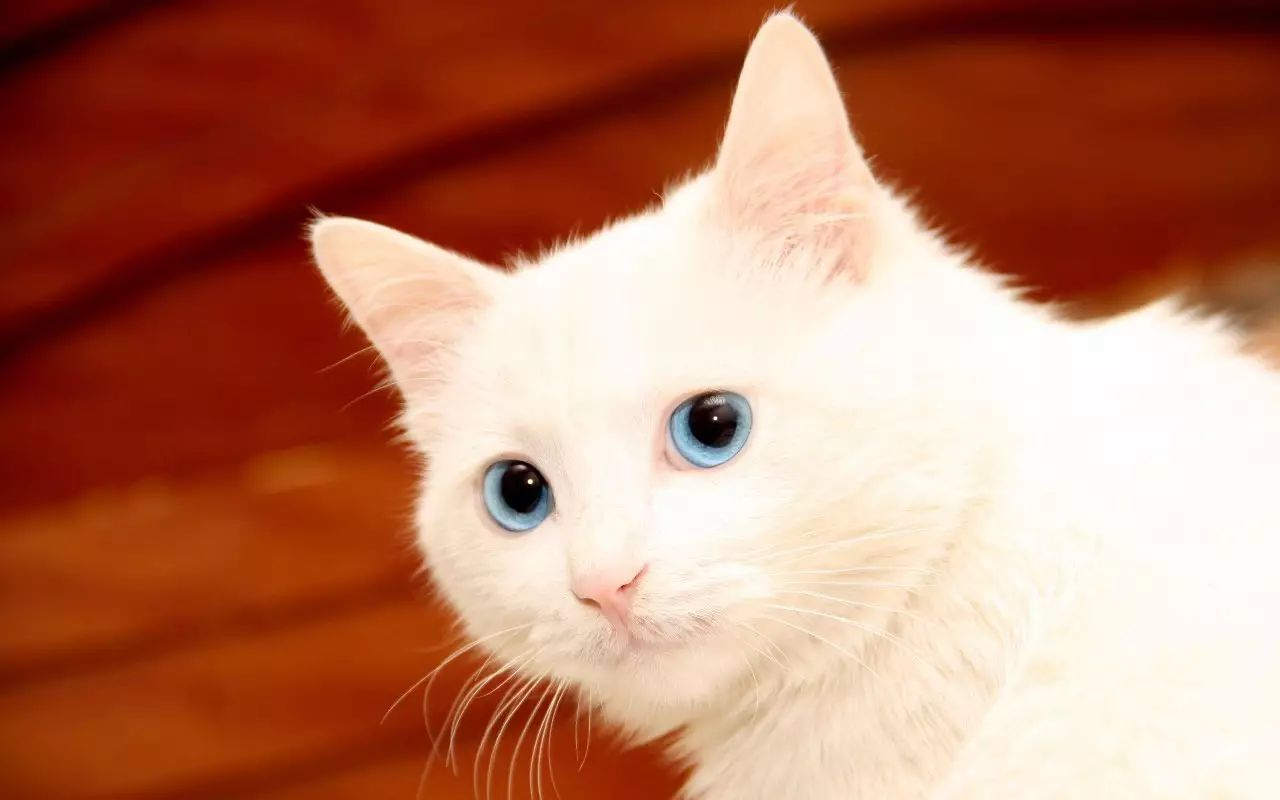 剪纸立体猫咪步骤图解