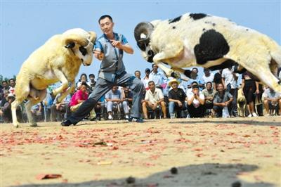 9月12日,在山东阳谷县李台镇四连村,小学们在观看斗羊v小学.一下载百分村民图片