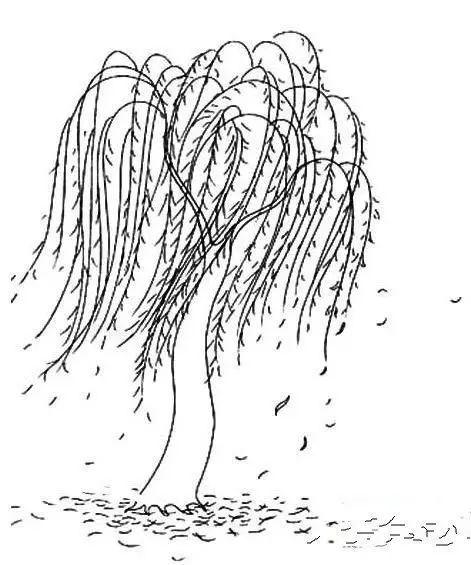 柳树简笔画 春天的柳树简笔画 柳树简笔画