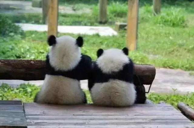 文化 正文  来源:沈阳日报,沈阳森林动物园官网,沈阳新闻综合频道