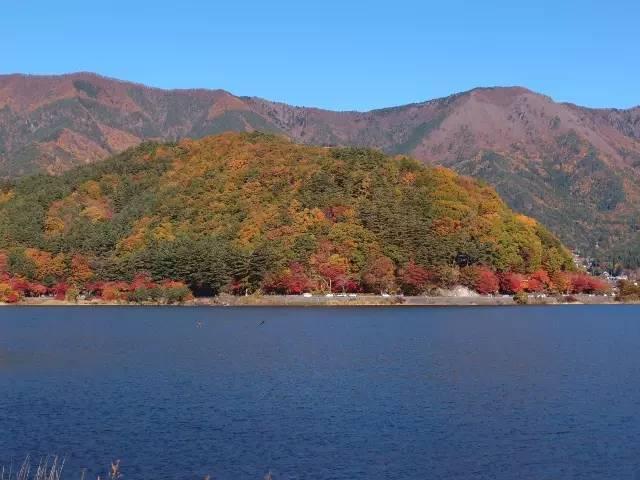 """你知道什么是""""红叶狩""""吗?错过这些秋景又要等一年!图片"""