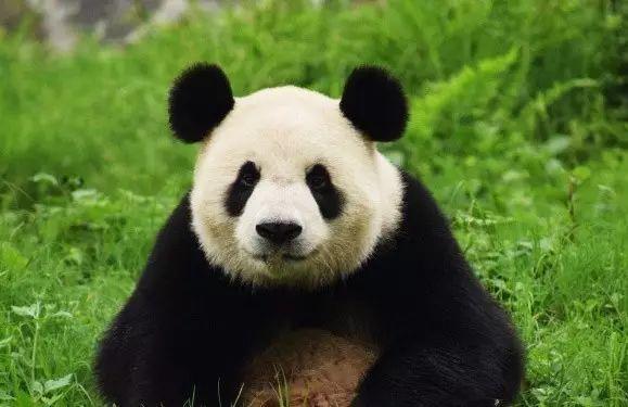 森林动物园门票为80元,熊猫馆门票为40元(另外购买)!