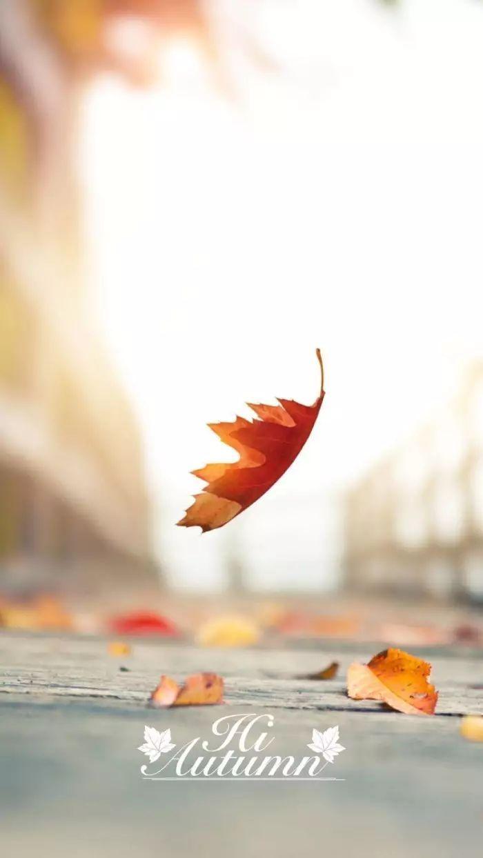 秋天的记忆 ——《落叶》
