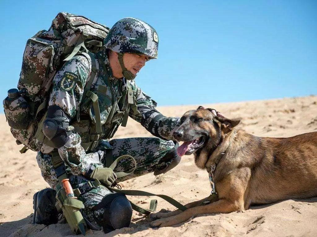 警犬,英勇的战士 !