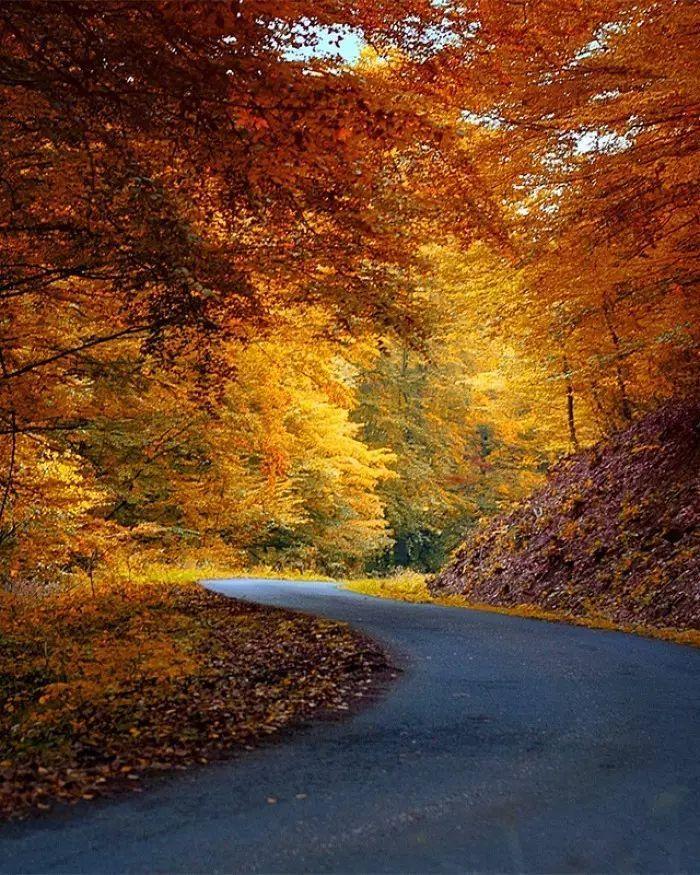 钢琴诗音乐《秋天的落叶》,唯美至极!