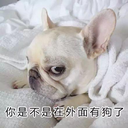你是不是外面有狗了_晚上回到家 都要接受来自狗子的 \