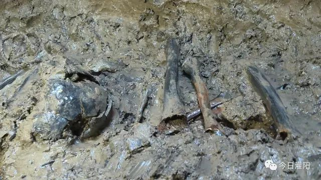 疑似沉睡83年的红军烈士遗骸出井并进行现场鉴定 - wmj69888 - wmj69888的博客