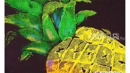 菠萝手工制作大全图片