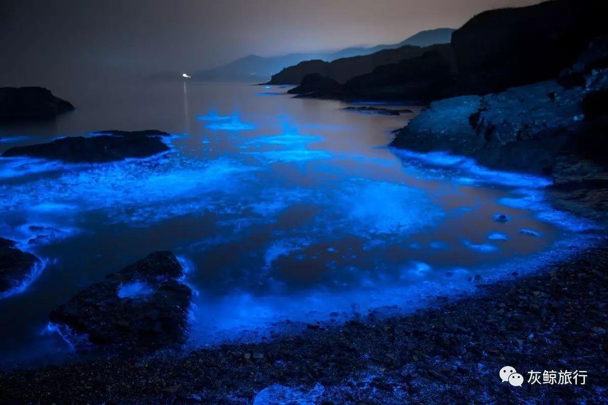这件事比秦皇岛的攻略更美,可遇不可求的荧光海出现了