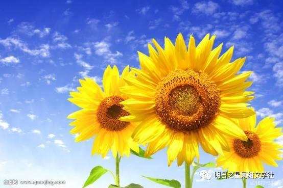 阳光向上的图片_积极向上的图片_阳光积极向上的图片 - 随意贴