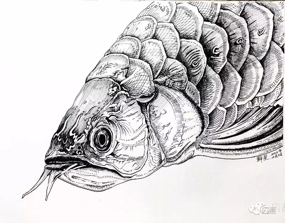 作品:黑白动物系列插画 画种:中性笔插画 感悟:喜欢的