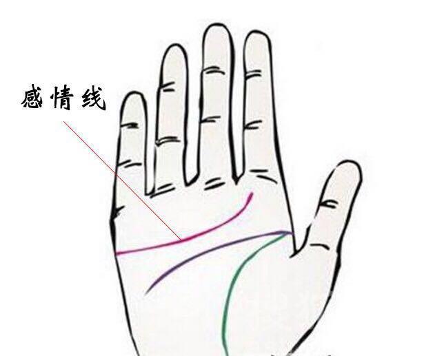 感情线:是西洋手相学的叫法,在中国手相学里叫天纹,是人体手掌上的