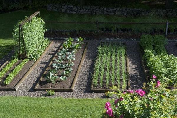 家庭庭院菜园设计——你需要知道什么?