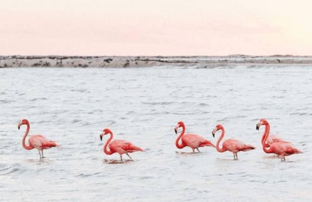 墨西哥粉红色小仙女湖泊--最爆火的网红地