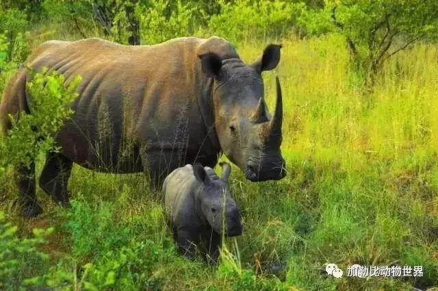 长治县加勒比动物世界即将开园啦!