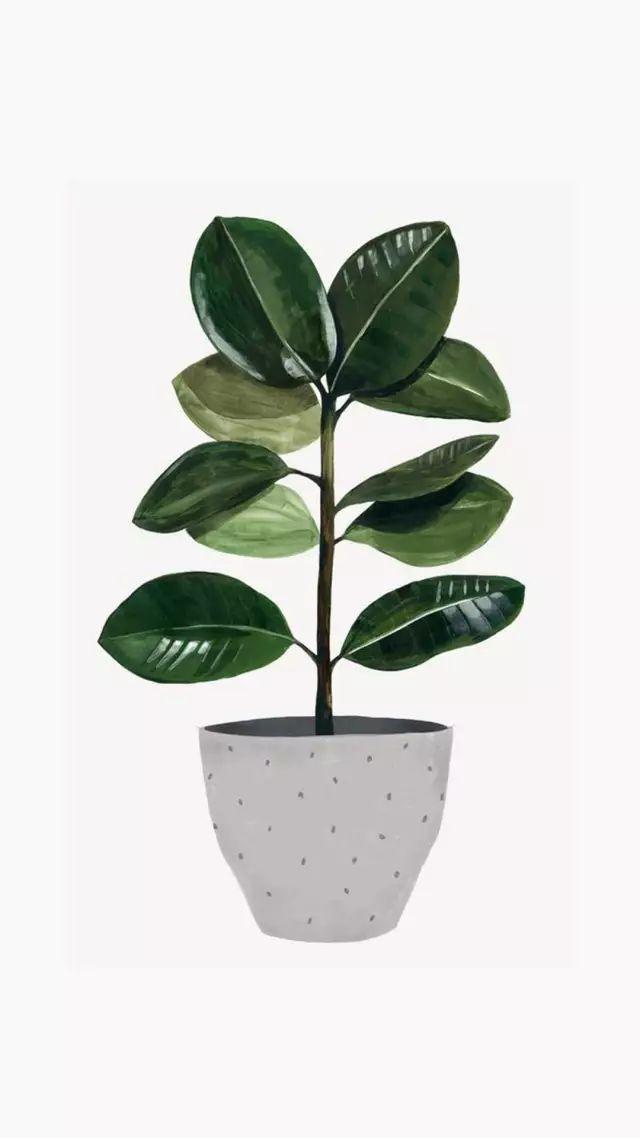 【植物】简约手绘植物手机壁纸