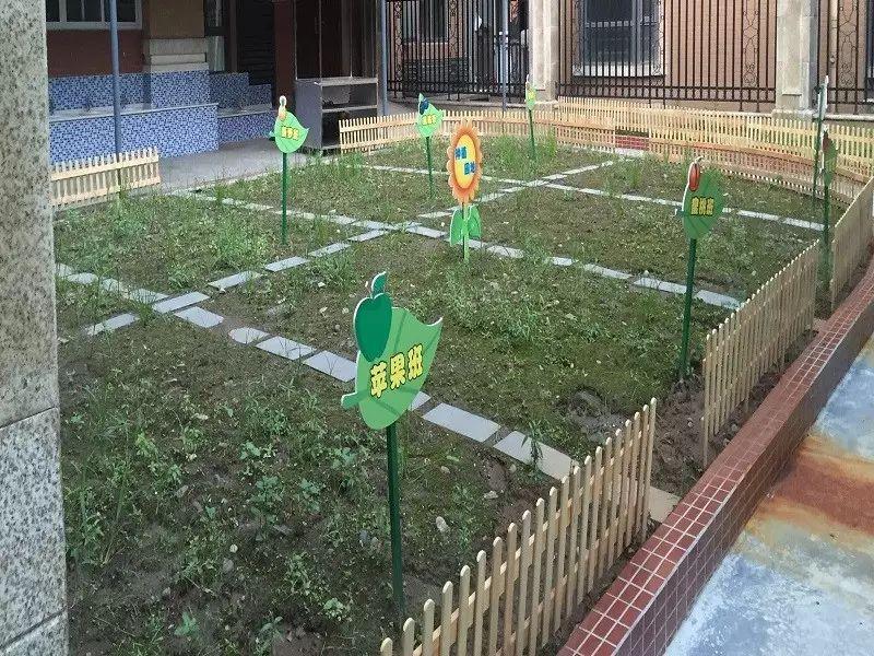 """"""" 澜洲幼儿园在园内为幼儿开辟了一片种植园区,将种植活动纳入幼儿园图片"""