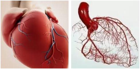 心绞痛的原因 心绞痛的症状 心绞痛是个什么鬼