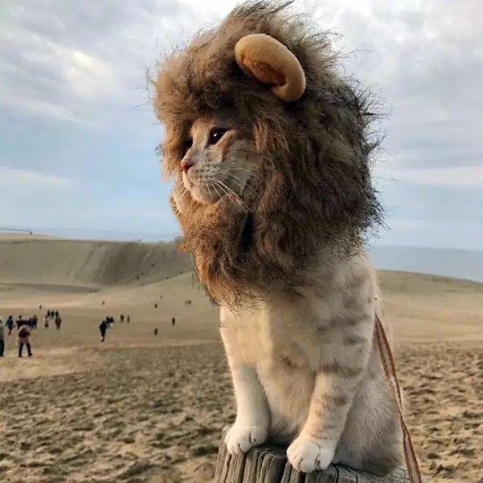 林��i���m_一只总是装扮成狮子的猫.i\'m the king of the world!