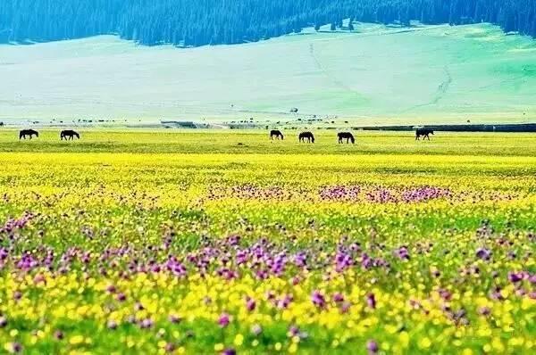 走遍了中国,还是新疆最美