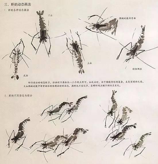 中国国画技法—虾的结构.虾为节肢动物,甲壳类,生活在水域.