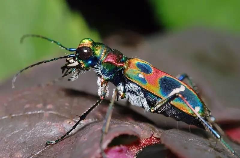 螳螂是害虫还是益虫_益虫的图片和名字,各种花的图片和名字,益虫和害虫有哪些图片 ...