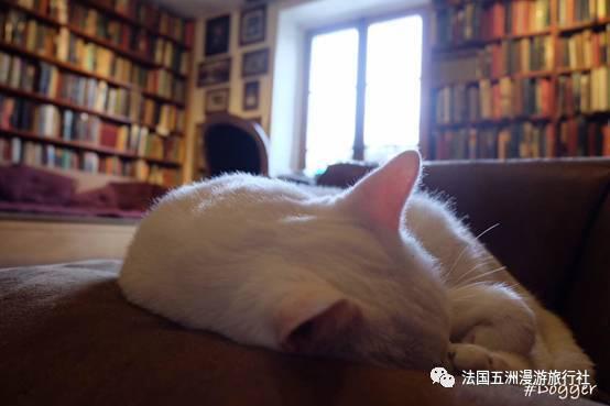 很很撸小说com_还有一只很可爱但是很慵懒的咪,满足你当书虫的同时撸猫,幸福感爆炸!