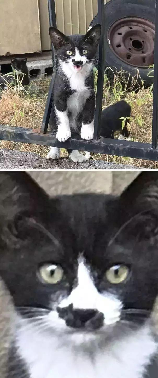 折猫咪的步骤图解