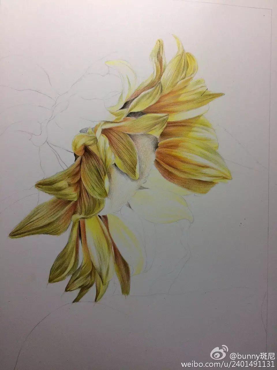 彩铅教程 | 秋日的一支向日葵
