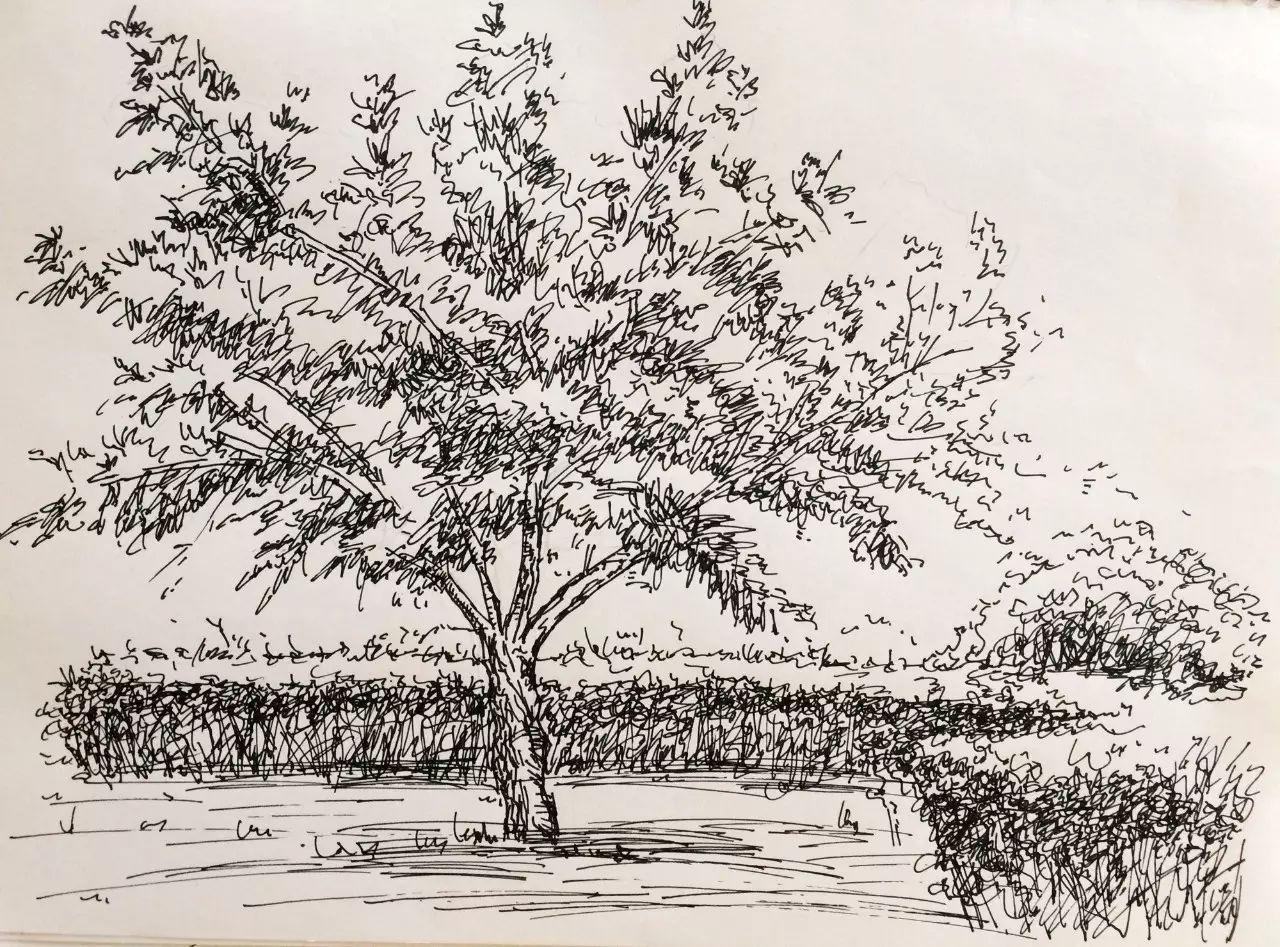 树描绘环境,建筑设计不可脱离环境 因此树很重要 接着是临摹,要做很多
