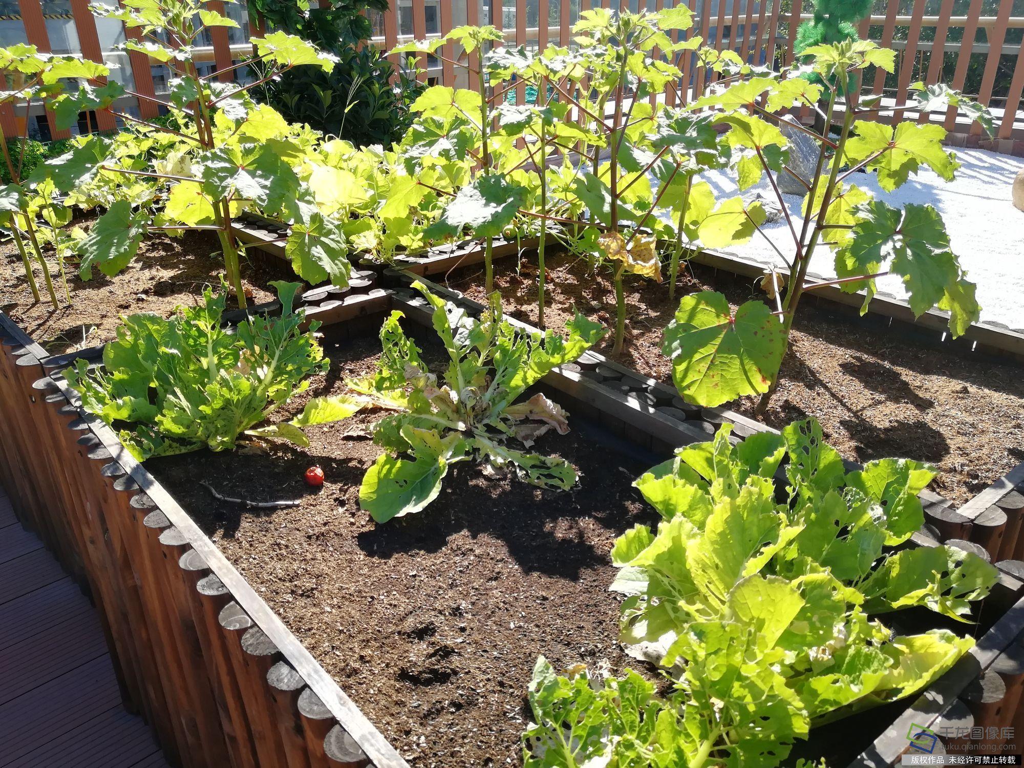 园设有内外两个小院和屋顶花园,不仅为老人提供了宽敞舒适的活