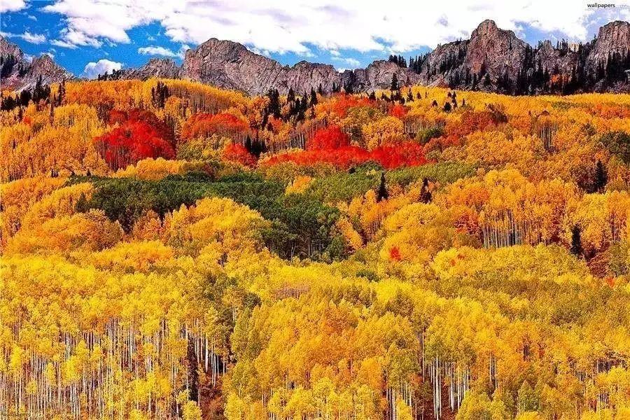 虽然加拿大的枫叶美得惊艳,然而惊喜的是,国内也有一个这样的地方图片