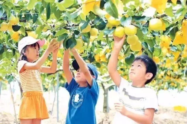 从儿童抓起、从点滴做起 - 从小学生10块钱午餐看日本国民素质教育