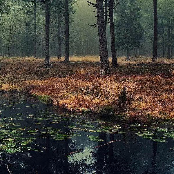 这首诗总写大自然的风光,这首诗使读者沉浸于大自然的笔画,思索着自然