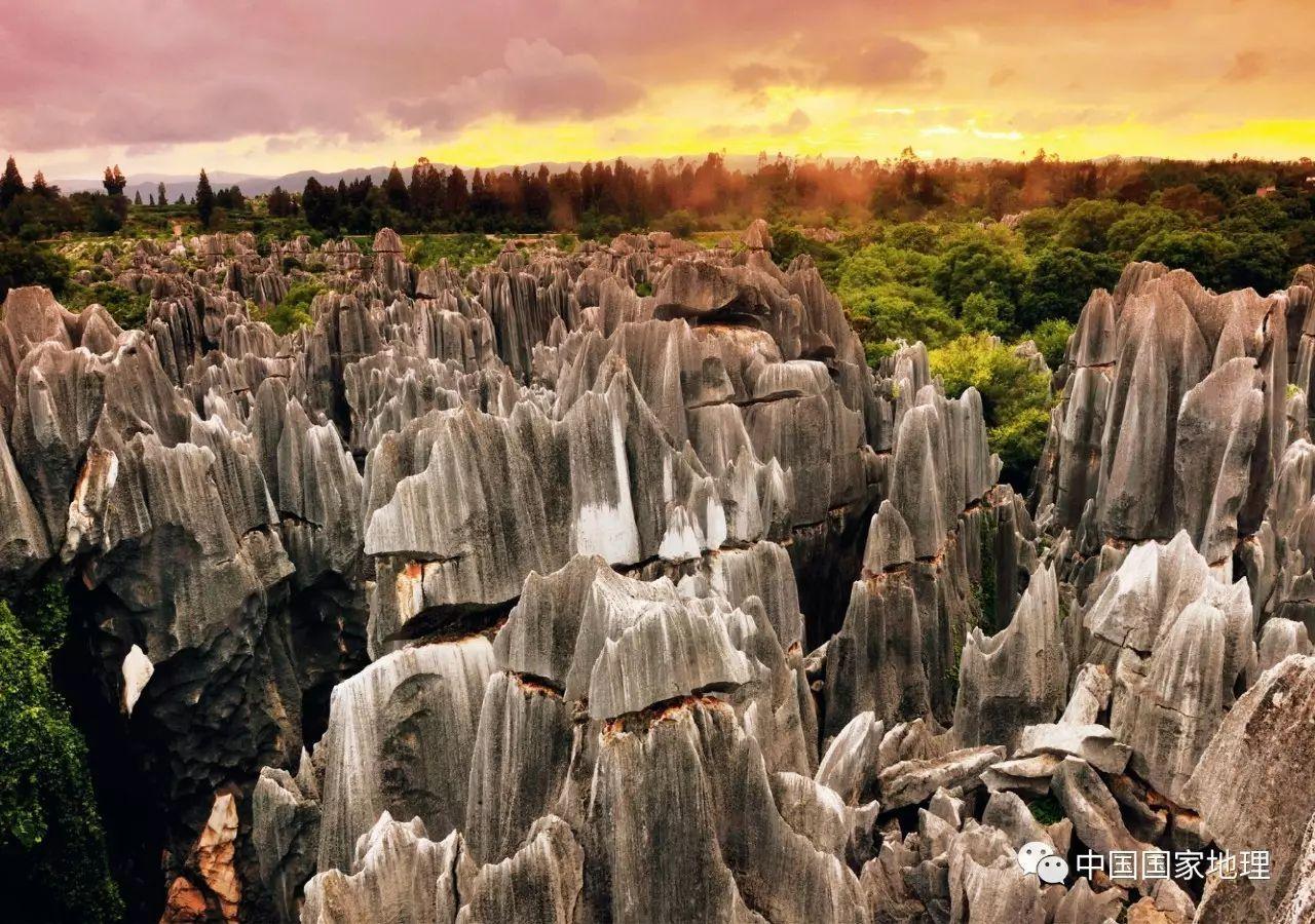 摄影:李贵云   霞光中,一片壮美的石林在绿荫丛中拔地而起.