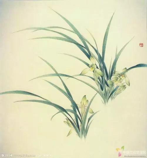 中国十大名花是哪些花 花语分别是什么