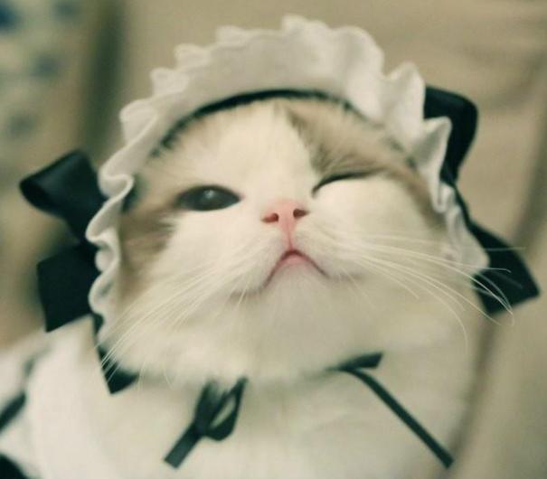网友养了一只布偶猫-小狐狸,原本就拥有高颜值的布偶猫,在主人精心