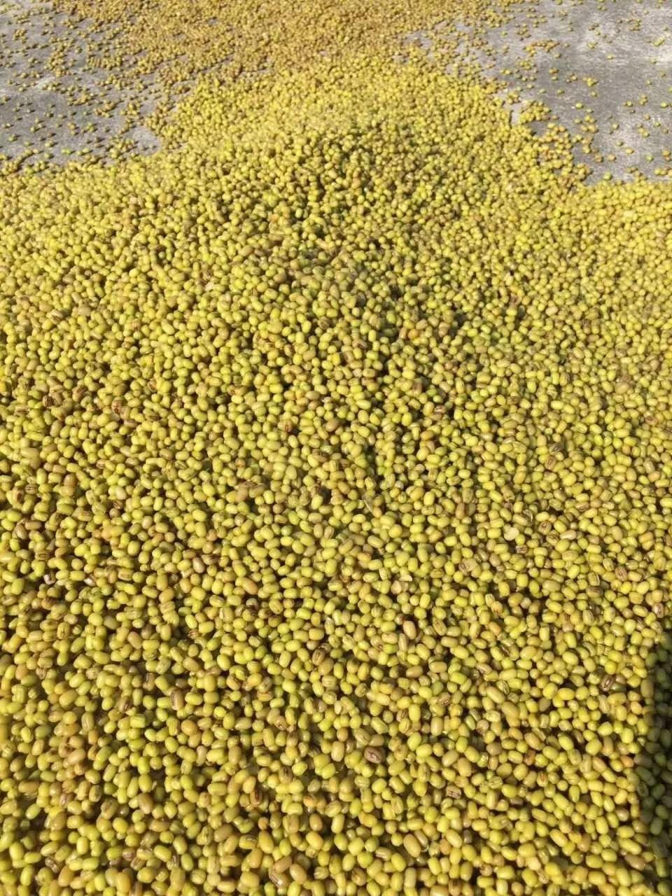 豆子做手工制作花