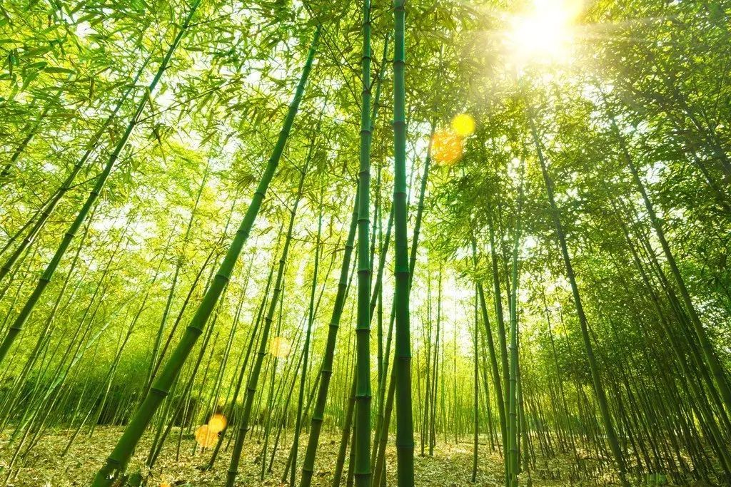 有雾竹林风景壁纸