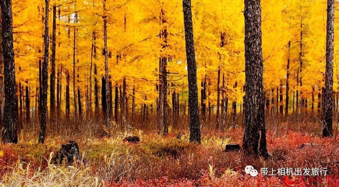 东北的秋天,美得像童话