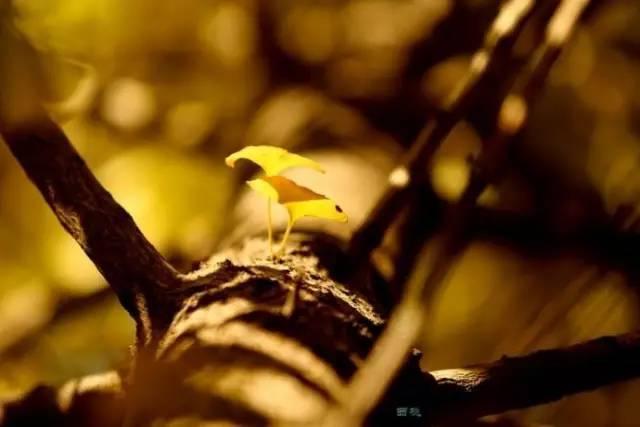在树干上,从树叶中透出的光线,运用长焦,大光圈虚化背景形成的光斑