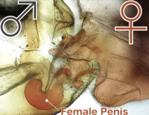 操后妈阴道感觉_教育 正文  产科学奖:胎儿更喜欢在母亲阴道里听到的音乐 biology