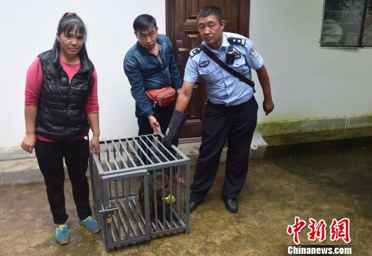 云南怒江:野生短尾猴被关8年森警闻讯及时解救