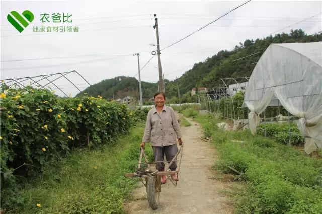 临安亭口村的这个农民,过着田园般的生活!