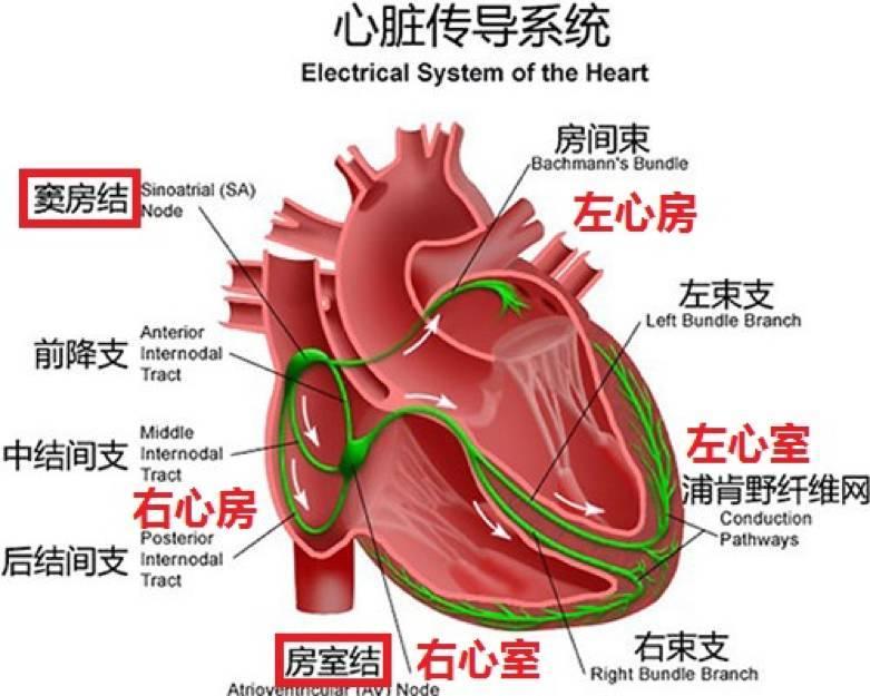 心脏除颤的作用原理_吴立群 易损性上限的电生理机制及临床评估除颤效用性的指导价值 上海交通大学医学院附属瑞金医院 吴立群 周建 金奇 365心血管网