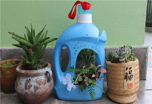 我们一次次为小植物浇水, 闲置的罐子变成了创意盆栽.图片