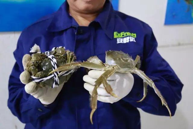 今年的阳澄湖沙家浜大戏,安鲜达初登场成主角-烽巢网