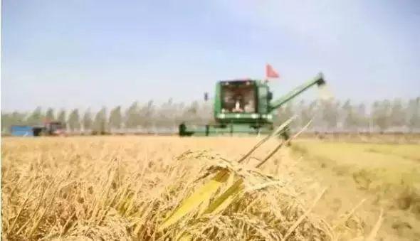 辽宁水稻价格_今年东北水稻会涨价还是与去年持平?